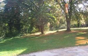 Parc de la Bergerie